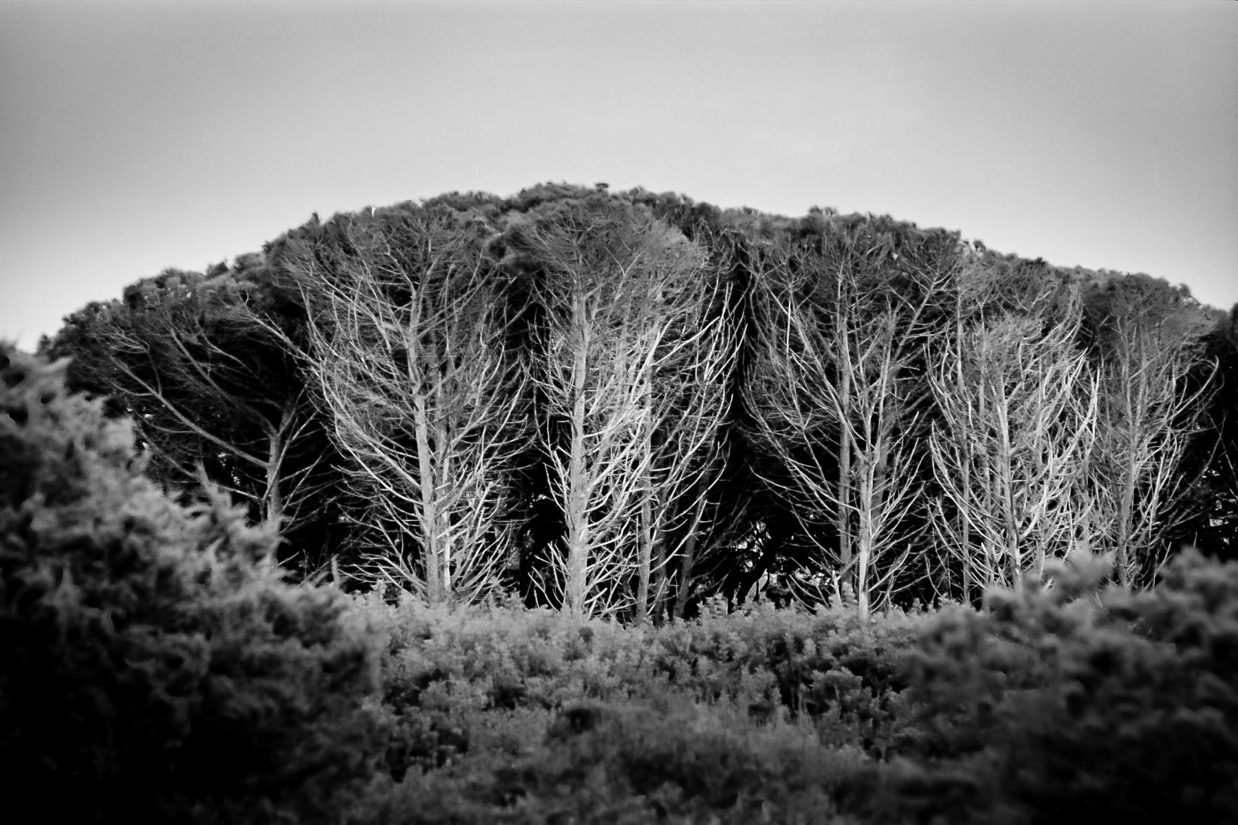 le colonne del mondo, gli alberi sono le colonne del mondo, quando gli ultimi alberi saranno stati tagliati, il cielo cadrà sopra di noi. proverbio degli indiani nativi d'america - tribù dei sioux